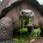 اكتشاف سلالات جديدة من السلاحف في جزر سانتا كروز
