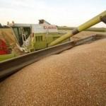 روسيا توافق على زيادة ضريبة تصدير القمح