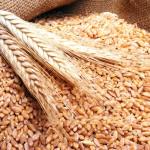 هيئة السلع المصرية تعدل شروط شراء القمح لخفض تكاليف الموردين