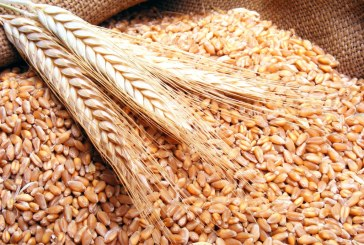 الأردن يعيد طرح مناقصة لشراء 100 ألف طن من القمح