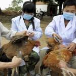 اليابان تؤكد ظهور حالة يشتبه أنها مصابة بإنفلونزا الطيور
