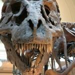 العثور على أثر قدم ديناصور عمره 230 مليون عاما شمال إسبانيا