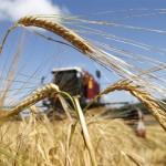 مصر تتلقى عروضا في مناقصة عالمية لشراء القمح