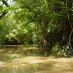 دراسة تحذر من اختفاء غابة الأمازون في غضون 50 عاما
