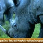 فيديو| معرض للحياة البرية يستلهم روح أفريقيا