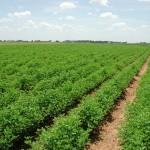 روسيا تحظر المزيد من واردات الخضروات التركية
