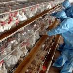 كوريا الجنوبية ترفع التحذير من تفشي أنفلونزا الطيور بعد رصد حالتين