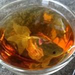 صور| أغلى شاي في العالم.. أسماك تلهو في فنجانك