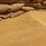 هيئة السلع المصرية تلغي مناقصة عالمية لشراء زيوت نباتية