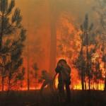 ارتفاع أسعار النفط مع استمرار حرائق الغابات في كندا