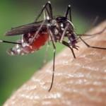 بنجلادش تسجل أول حالة إصابة بفيروس «زيكا»