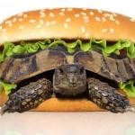 إنسان ما قبل التاريخ كان يتغذى على مقبلات من السلاحف المشوية