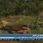 فيديو| الجيش الجزائري يحبط مخططا إرهابيا علي الحدود الشرقية