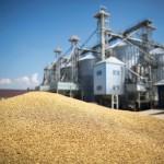 الجزائر تطلب من روسيا مزيدا من الجرأة لدخول سوق القمح