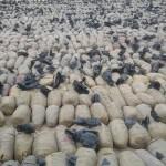 صور  القوات المصرية تضبط كميات من المخدرات والسجائر المسرطنة على الحدود