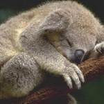 دراسة: ثدييات أستراليا المغمورة في حاجة لتسليط الضوء عليها