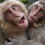 علماء: عمليات هجرة بحرية ضخمة لقرود قبل 21 مليون سنة