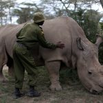 سوازيلاند تطلب من الأمم المتحدة بيع مخزونها من قرون وحيد القرن