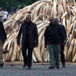 صور  رئيس كينيا يحرق كمية ضخمة من العاج احتجاجا على التجارة غير المشروعة