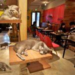 في اليابان.. السماح لقطط المقاهي بالعمل حتى العاشرة