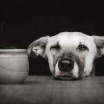 الكلاب المدربة سلاح بيد طبيب لبناني لمواجهة فيروس كورونا