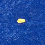 حطام الطائرة المصرية في أعمق منطقة بالبحر الأبيض المتوسط
