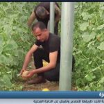 فيديو| الزراعة في غزة تعاني من انهيار اقتصادي حاد