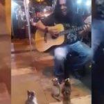 فيديو  عازف جوال يتخصص في العزف للقطط