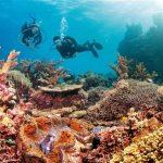 الشعاب المرجانية في بحر الصين الجنوبي تواجه الاندثار