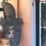 رجل تايلاندي يفقد منزله بسبب سحلية ضخمة