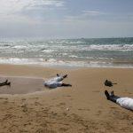 مهرب بشر: مصريون يشترون مهاجرين عبر المتوسط لاستخدامهم في تجارة «الأعضاء»
