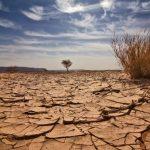 أفريقيا تتطلع للدفاع موحدة عن مصالحها الزراعية عشية مؤتمر المناخ العالمي