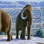 علماء: نقص المياه العذبة وراء انقراض آخر مجموعة من حيوان الماموث