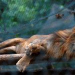 فنزويلا تنفي نفوق حيوانات في منتزه كاريكوا بسبب الجوع