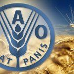 فاو: تراجع أسعار الغذاء العالمية 0.8% في يوليو