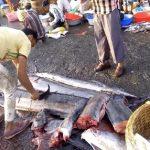 مسلمو الهند يستبدلون الأضاحي بالأسماك بسبب حظر «ذبح الأبقار»