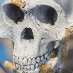 حفريات تلقي بظلال من الشك على نشوء سلالة النسب البشري في أفريقيا