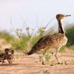تغير المناخ يهدد ثلثي الطيور في أمريكا بالانقراض