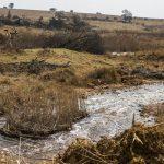 هارفارد: جنوب أفريقيا لم تحم السكان من تلوث «تعدين الذهب»