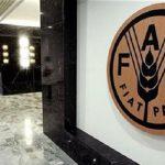«فاو»: ارتفاع أسعار الغذاء العالمية في مايو