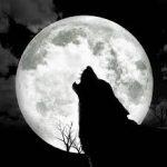 هل تكثر الحوادث حين يكون القمر بدرا؟
