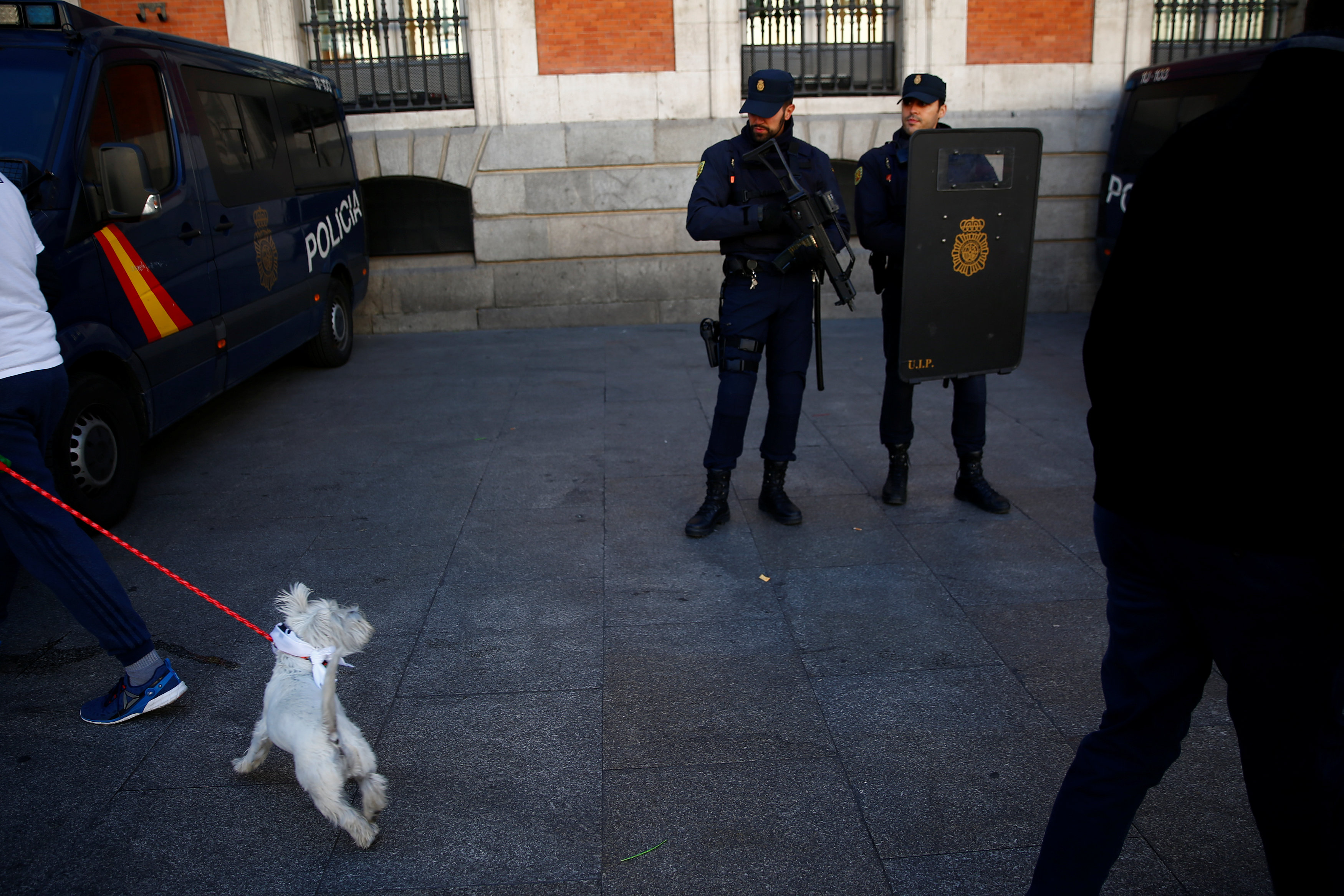 A dog turns around to look at police officers on patrol ahead of New Year's celebrations in central Madrid