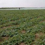 الآفات قد تكبد قطاع الزراعة العالمي مليارات الدولارات سنويا