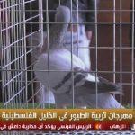 فيديو| مهرجان تربية الطيور في الخليل الفلسطينية