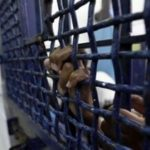 هيئة شؤون الأسرى: تدهور الحالة الصحية لـ4 أسرى في سجون الاحتلال