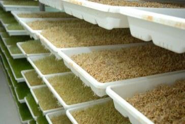 السعودية تشتري 1.5 مليون طن من علف الشعير في مناقصة