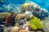 علماء يبحثون الحد من تأثير تغير المناخ على الشعاب المرجانية