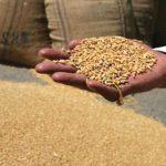 وزارة التموين المصرية تحذر المزارعين بشأن مستويات الرطوبة