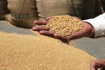 مصر تمنح حوافز إضافية للقمح المورد في أجولة وللصوامع البعيدة