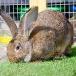 «يونايتد إير لاينز» تواجه فضيحة جديدة بسبب «أرنب»